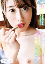 Like a Sunflower 星宮一花